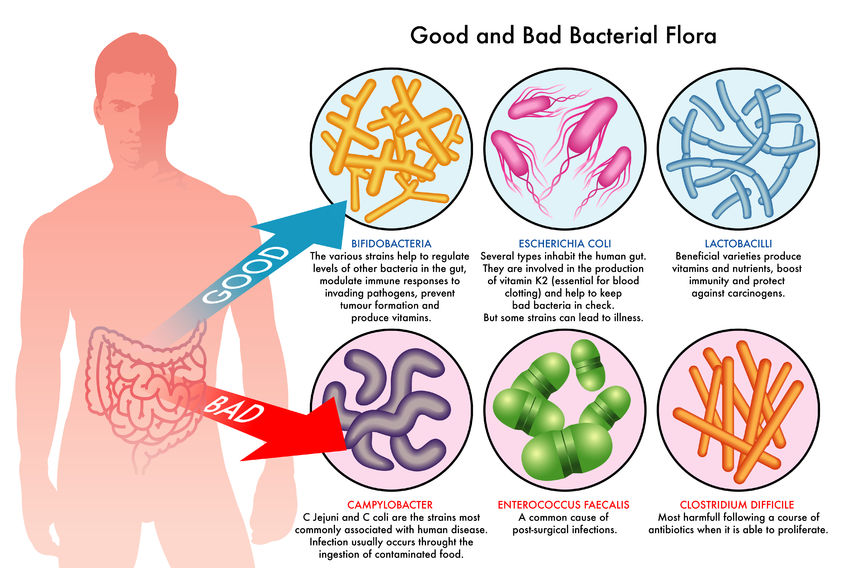 The Benefits of a Good Probiotic